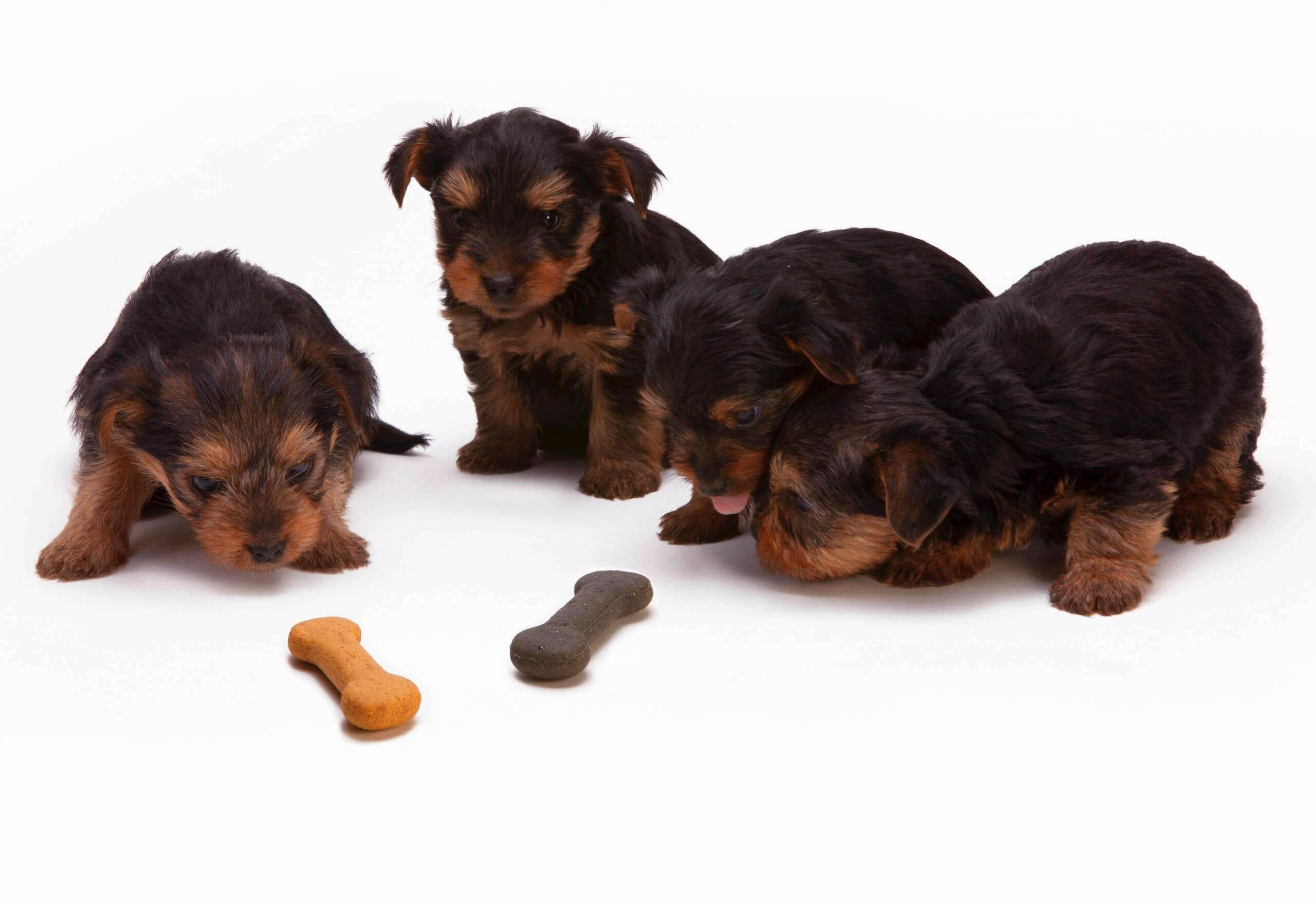 ¿Porque es importante elegir bien la alimentación para tu mascota?