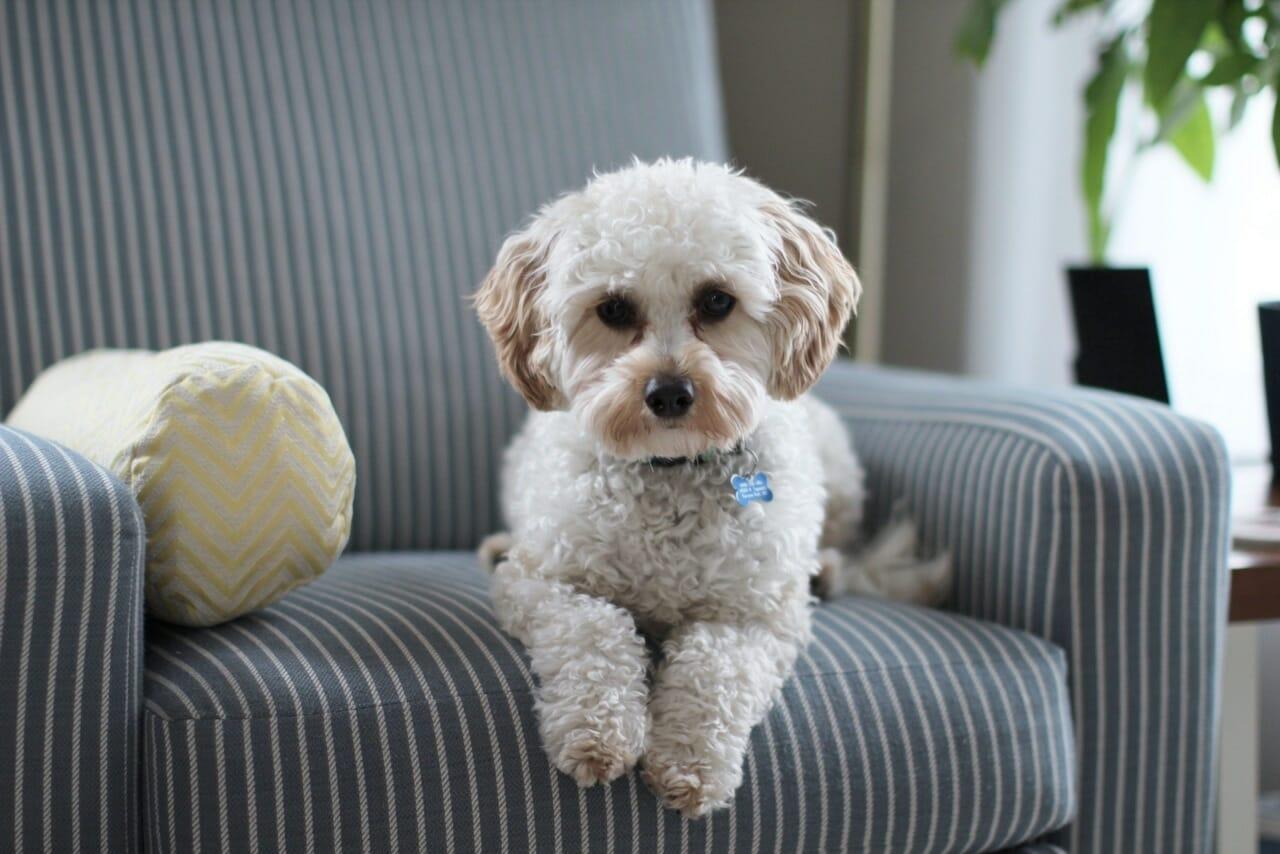 Las ventajas de comprar pienso para tu mascota online