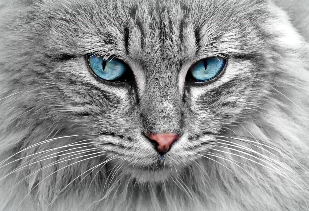 Mi gato: secretos para una dieta saludable